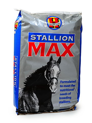 stallion max.png