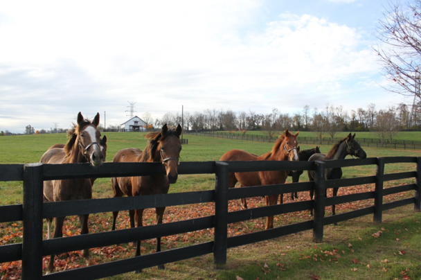 High-protein horse feed; does your horse need it?
