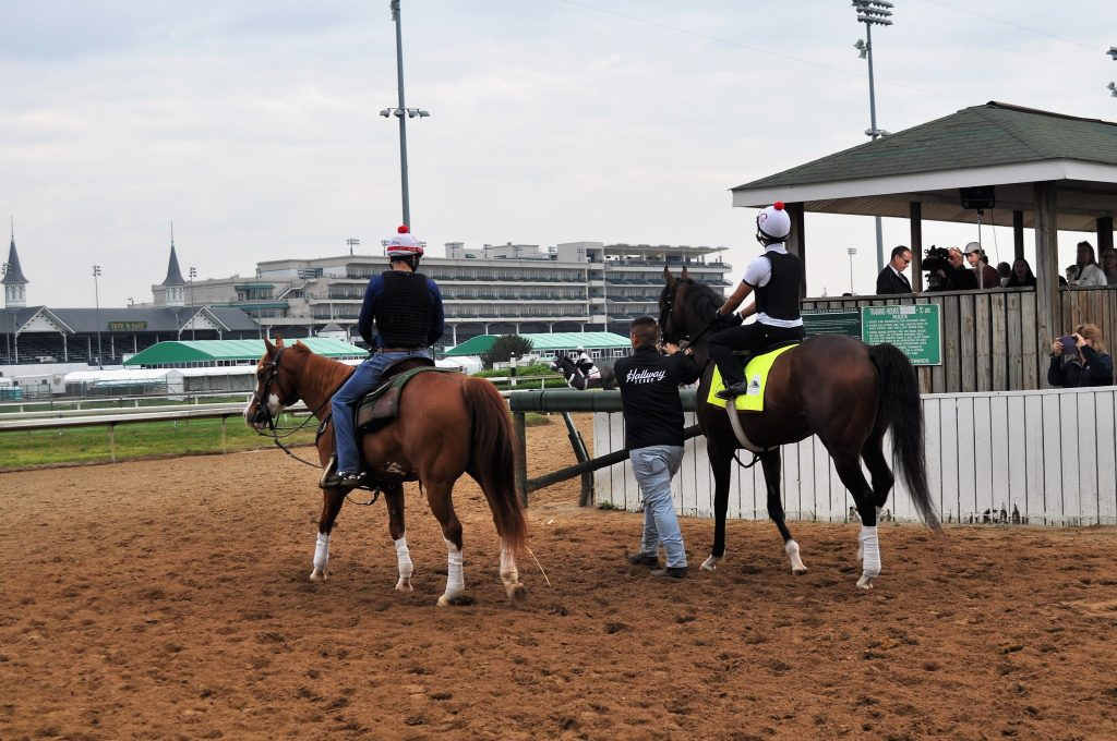 Racehorse being led to the track by a pony horse.