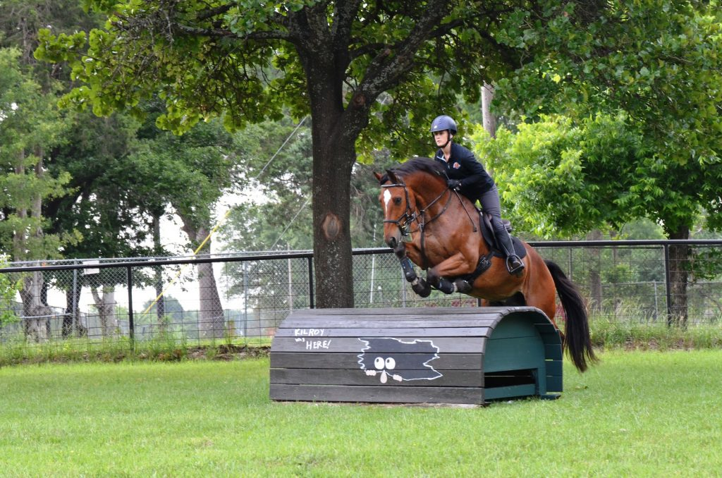 Bay horse jumping over cross country jump.
