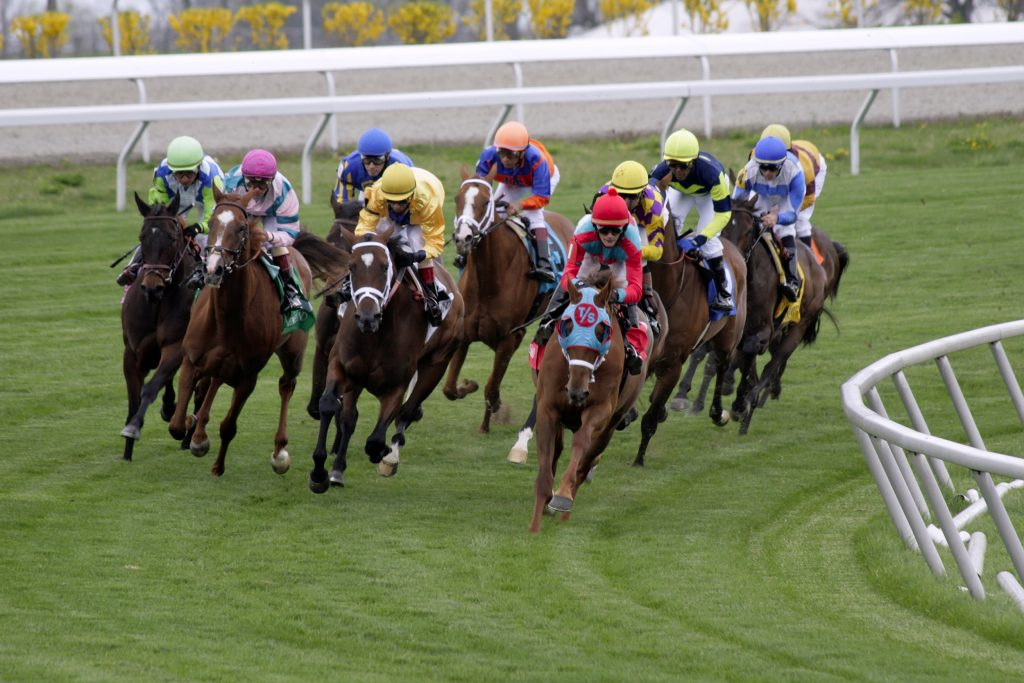 Horses racing on the turf at Keeneland Race Course