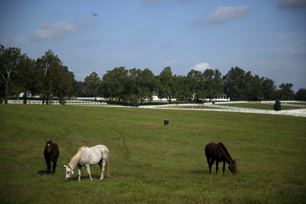 Horses grazing on Drought-affected Pastures during a summer day.